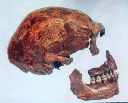 Неандертальцы-каннибалы съели неандертальцев-веганов?