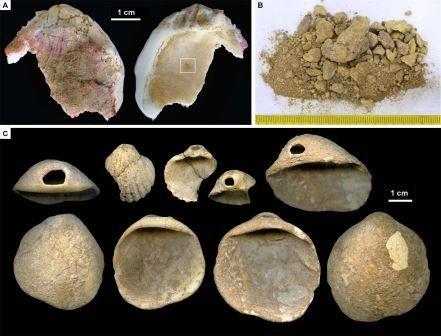 Неандертальцы первыми придумали украшения из раковин