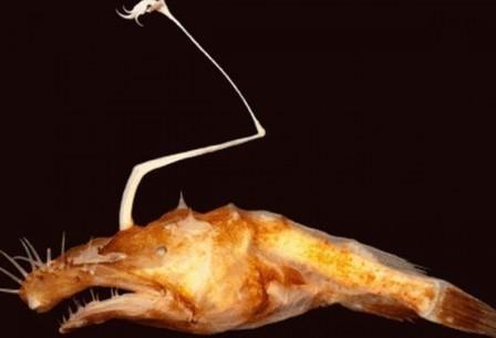 Неизвестный науке «монстр» найден на дне мексиканского залива