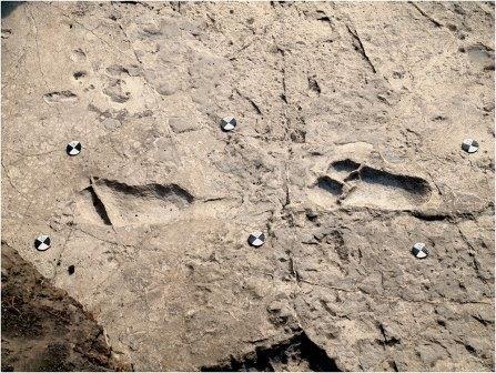 Новые следы австралопитеков озадачили антропологов