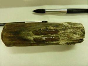 Новый полимер защищает артефакты из дерева