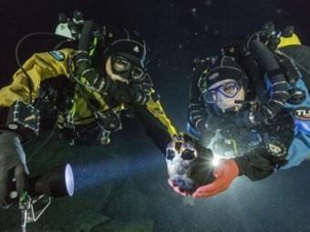 Обнаружен самый древний, генетически неповрежденный скелет человека