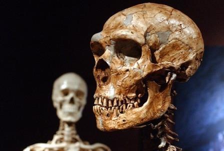 Окаменевшие фекалии рассказали о диете неандертальцев