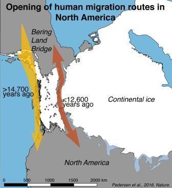 Описан путь расселения древних сибиряков по северной америке