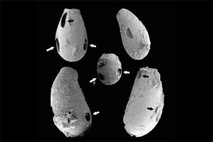 Палеобиологи обнаружили древних амеб-вампиров