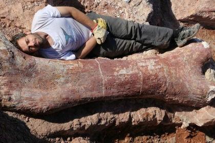 Палеонтологи нашли останки крупнейшего динозавра. видео