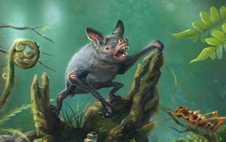 Палеонтологи нашли в новой зеландии ископаемую летучую мышь