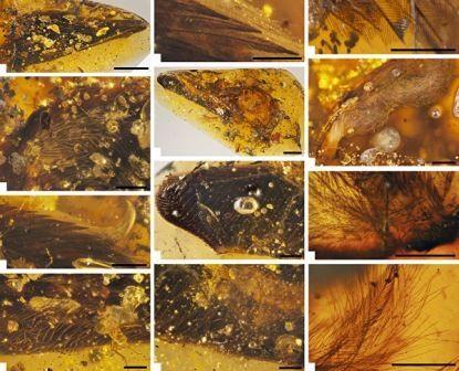 Палеонтологи впервые нашли крылья птиц времен динозавров внутри янтаря