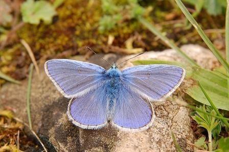 Перестройки днк удалось объяснить благодаря бабочкам