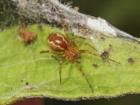 Персональные черты пауков определяют их производительность труда