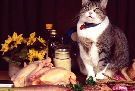 Почему кошки так привередливы в еде