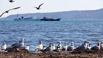 Помогут ли китайские и украинские мигранты поднять дальний восток? - «экономика»
