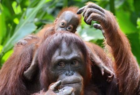 Предки человека начали употреблять алкоголь 10 миллионов лет назад