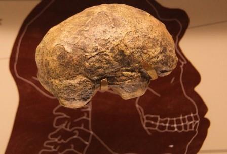 Предложена новая дата отсчета начала антропоцена