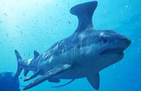Примитивность акул сильно преувеличена