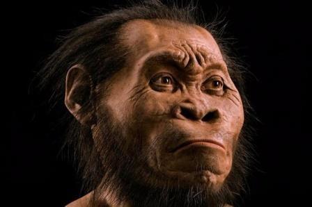 Примитивные гоминиды жили одновременно с человеком разумным