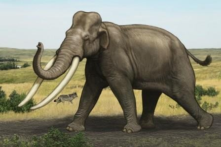 Прочитаны геномы шести видов слонов и мамонтов