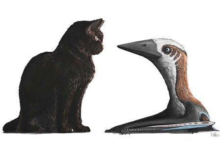 Птерозавр размером с кошку жил среди родственников-гигантов