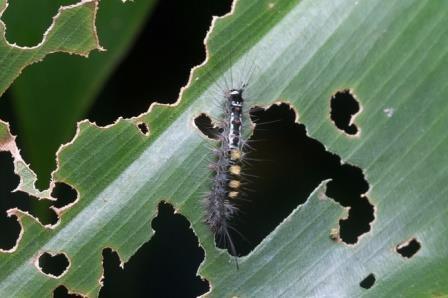 Растения провоцируют каннибализм у травоядных насекомых