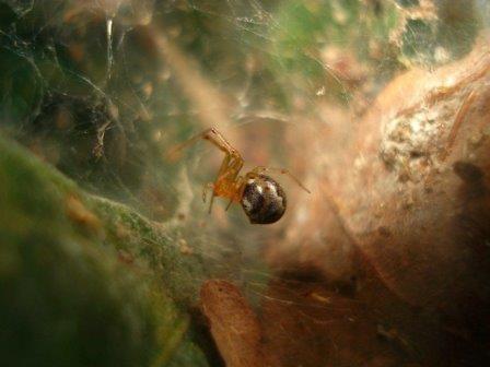 Разнообразие характеров позволяет паукам переживать резкие скачки температуры