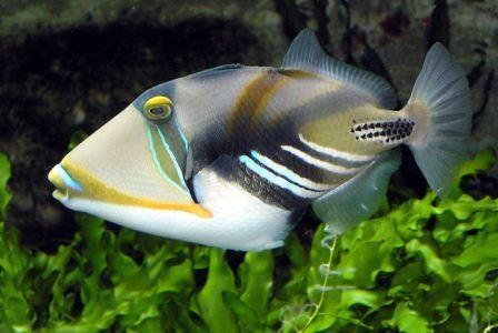 Рыбу можно обмануть оптической иллюзией
