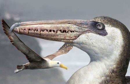 Самые большие птицы в мире жили в антарктике