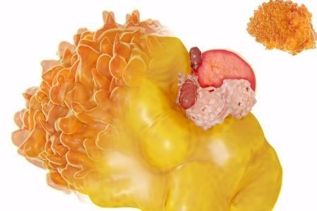 Сибирские генетики раскрыли механизмы «непослушного» ожирения