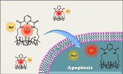 Синтетическая молекула заставляет онкоклетки самоуничтожиться