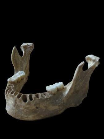 Следы близкого родства с неандертальцами нашли у древнего кроманьонца из европы