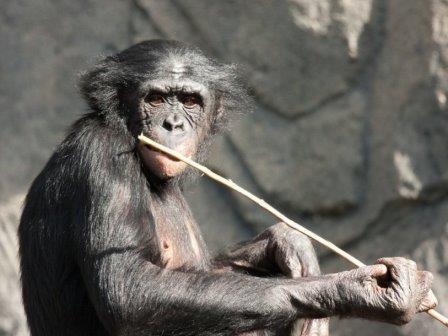 Сложная еда увеличила мозг приматов