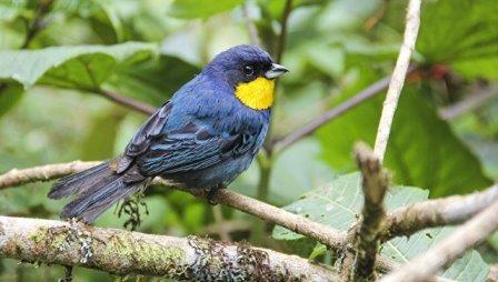 Сотни видов тропических птиц могут исчезнуть в ближайшие годы