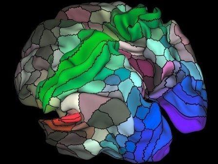 Сотню неизвестных областей обнаружили в мозге человека