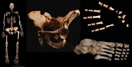 Старые кости о главном. анализ скелетов из сима де лос уэсос