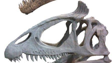 Тираннозавры носили цветные «ирокезы», выяснили ученые