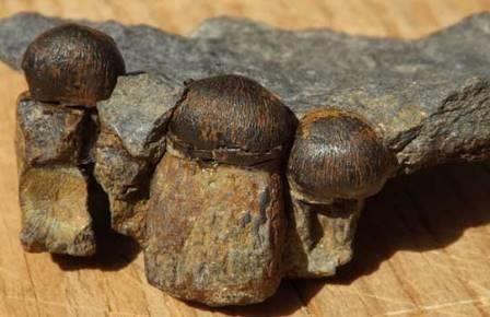 Тропический ихтиозавр из приморья оказался «немцем»