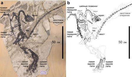 У динозавра нашли современные перья