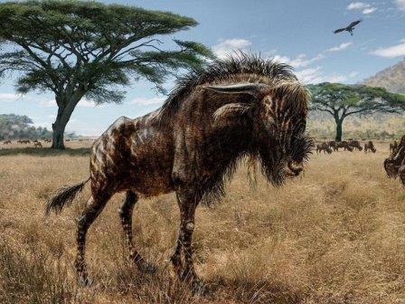 У родственника антилопы гну имелась инфразвуковая вувузела