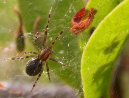 У социальных пауков обнаружили групповой отбор