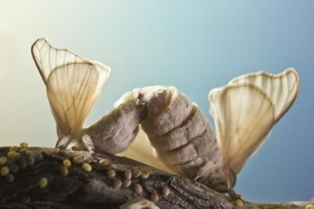 Ученые из новосибирска объяснили культ насекомых в древнем китае