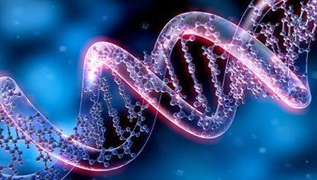 Ученые нашли гены, определяющие размеры семьи и время рождения первенца