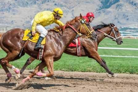Ученые нашли восточных предков современных лошадей