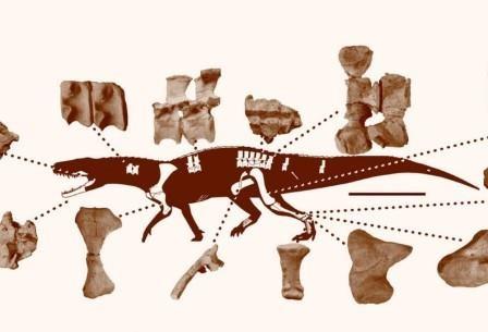 Ученые открыли древнюю рептилию, жившую до динозавров