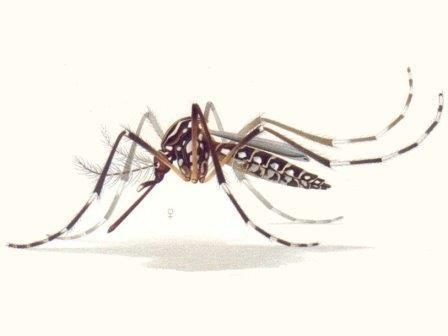 Ученые проверили эффективность средств от комаров
