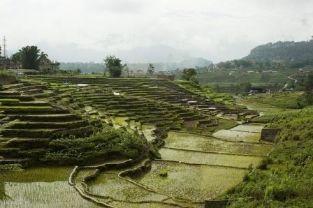 Ученые раскрыли секреты фермерства первых цивилизаций земли