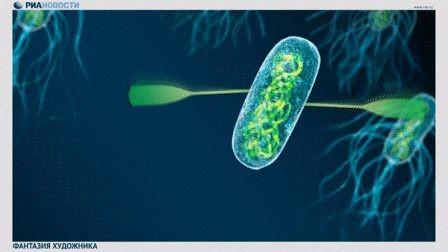 Ученые раскрыли секреты сборки самых мощных биомоторов на земле