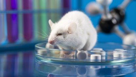 Ученые создали первый искусственный эмбрион мыши из стволовых клеток