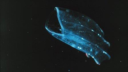 Ученые выяснили, как выглядели первые животные земли