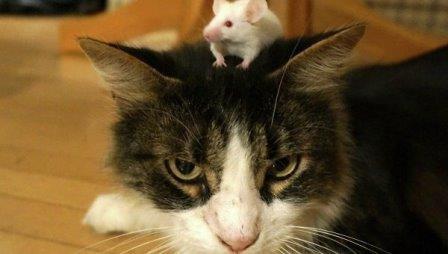 Ученые выяснили, как «зомби»-паразит кошек управляет мозгом человека
