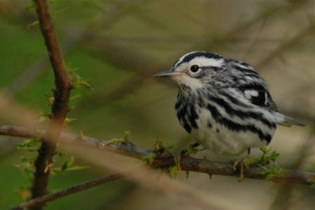 Ученые выяснили, зачем птицы запасают лишний жир