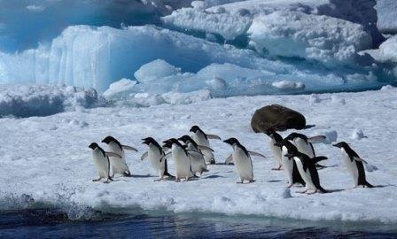 В антарктиде найдены перерабатывающие парниковый газ микробы